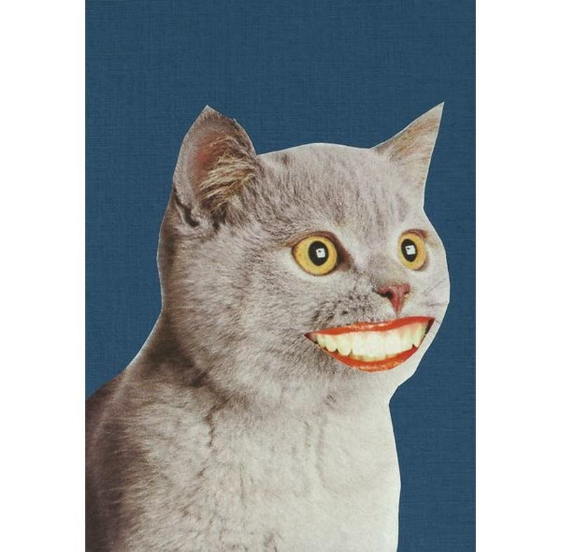 Alisson Hernandez's profile picture