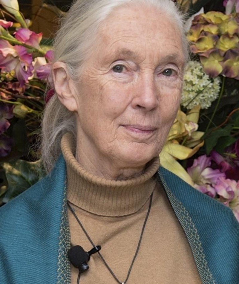 Photo of Jane Goodall