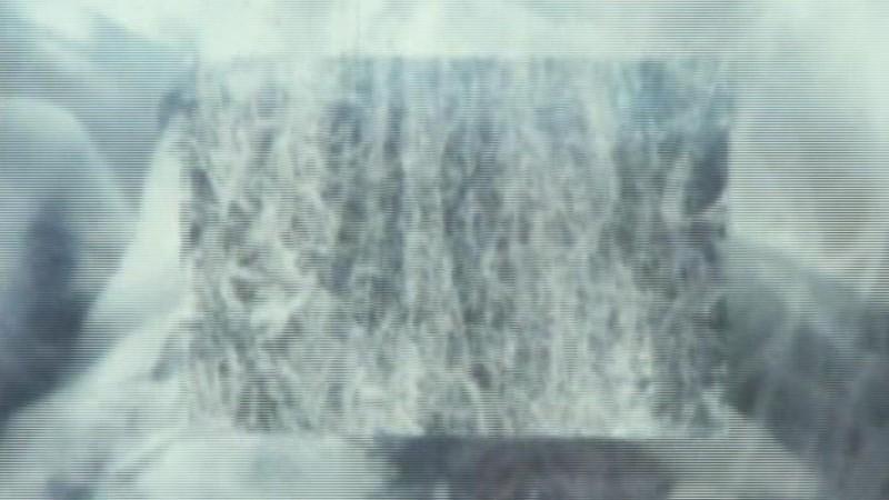 Ecosystem-6: A Sort of Mycelium