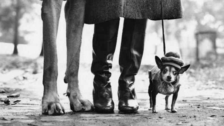 Elliott Erwitt: I Bark at Dogs