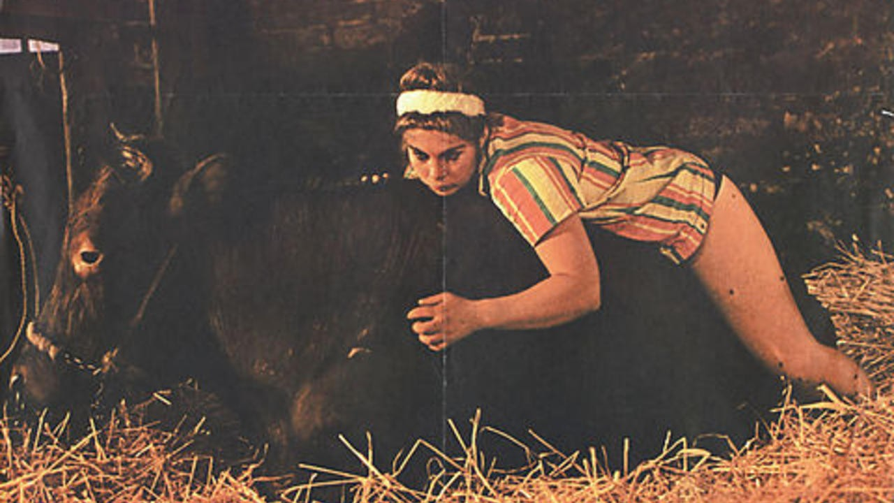 Animal Farm Bodil Joensen