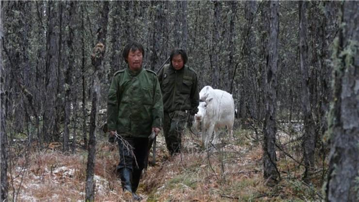 The Last Moose of Aoluguya