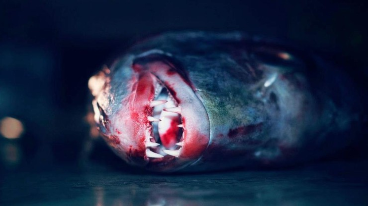 Fish Choked to Death