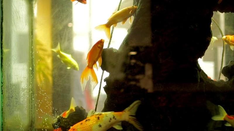 L'aquarium et la nation