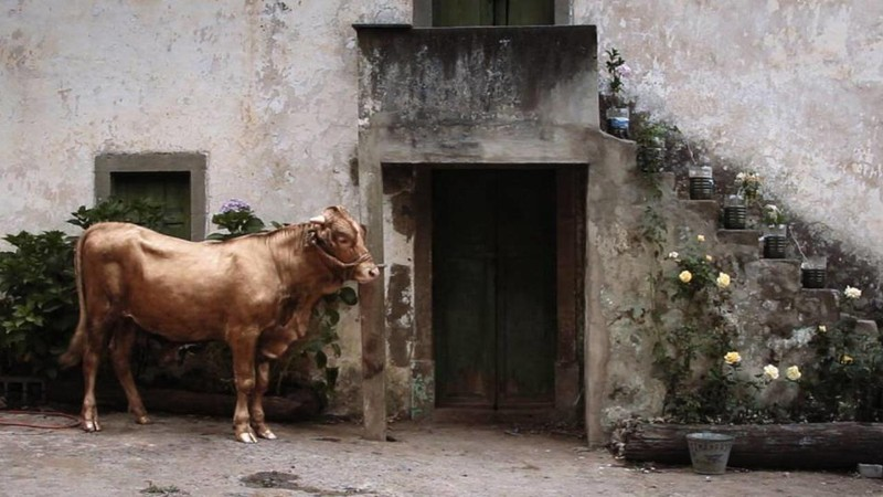 The Painted Calf