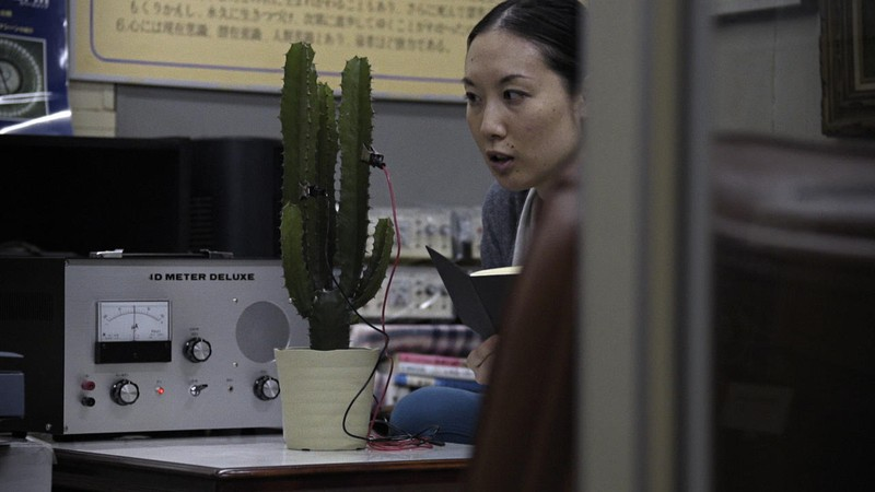 Conversation with a Cactus