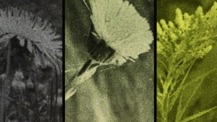 See Weeds