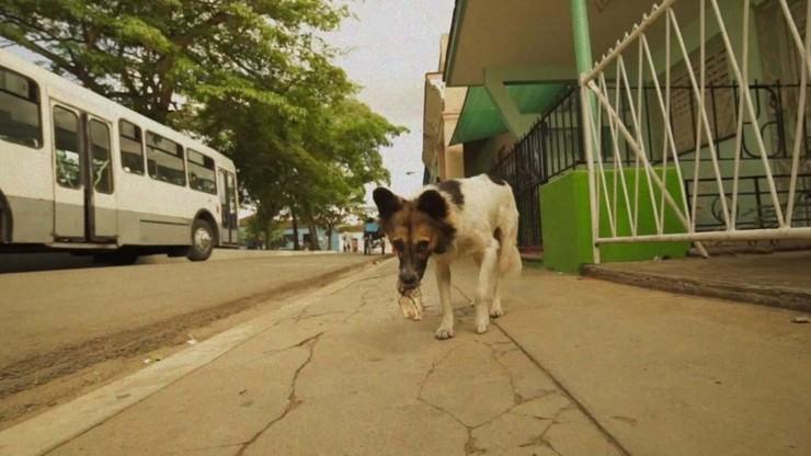 A Day a Dog in Cuba