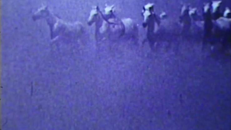 Dream of the Wild Horses