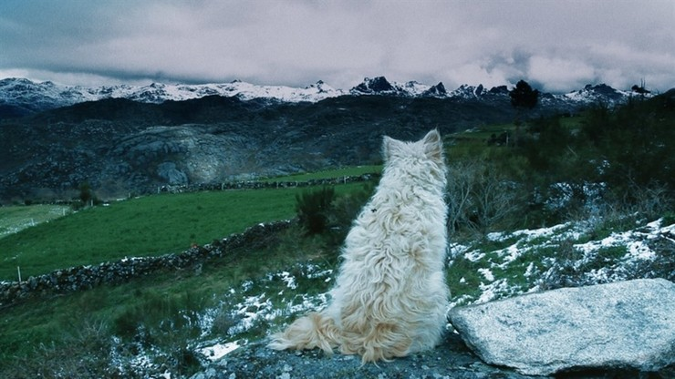 Histories of Wolves