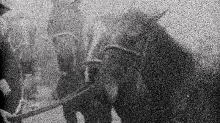 3 Dreams of Horses