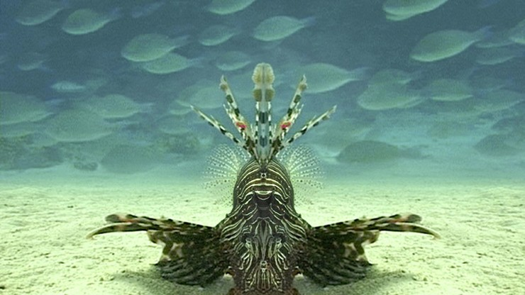 Careless Reef Part 4: Marsa Abu Galawa