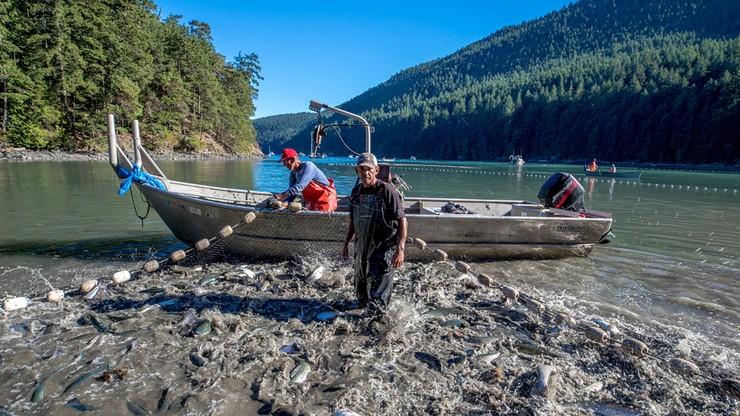 Frankenfish: A Farmed Atlantic Salmon Story