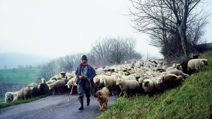 Shepherds' Journey Into the Third Millenium
