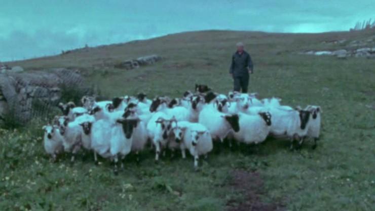 The Shepherds of Berneray