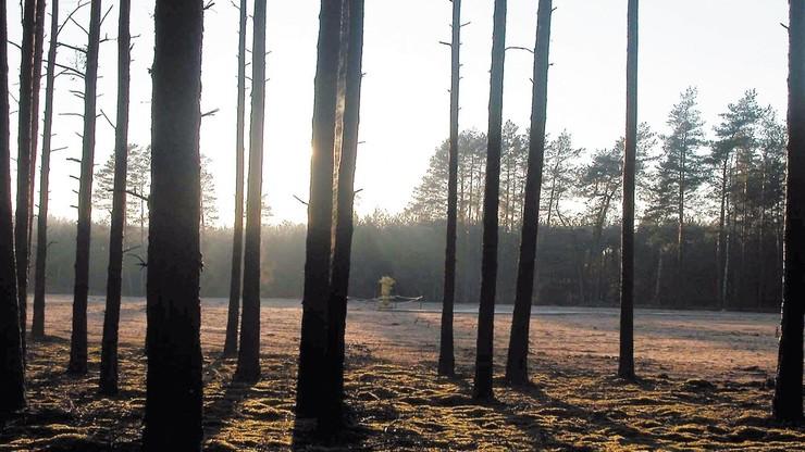 Black Gold under Notecka Forest