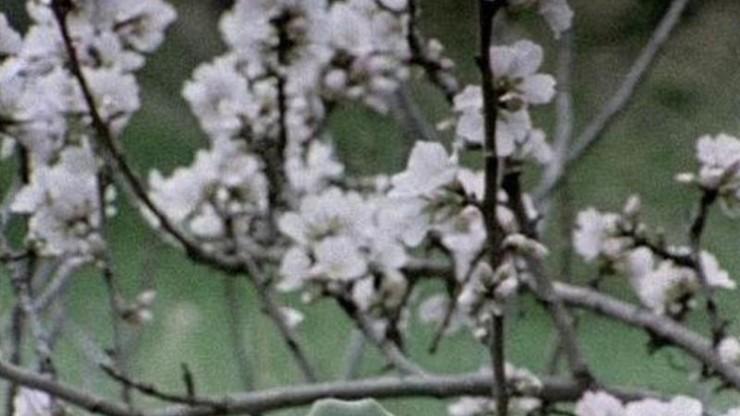 Hic Rosa, Botanical Score