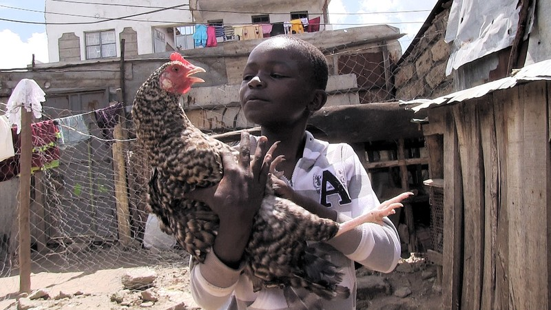 Chickens for Kimaru