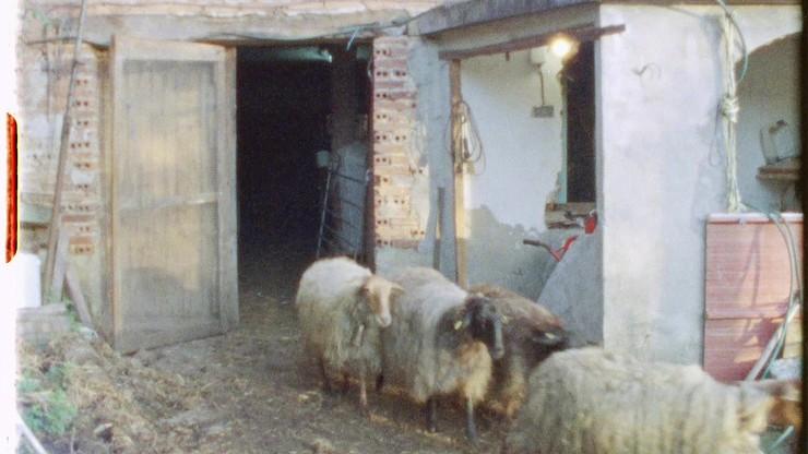Sheep Reels 1-7