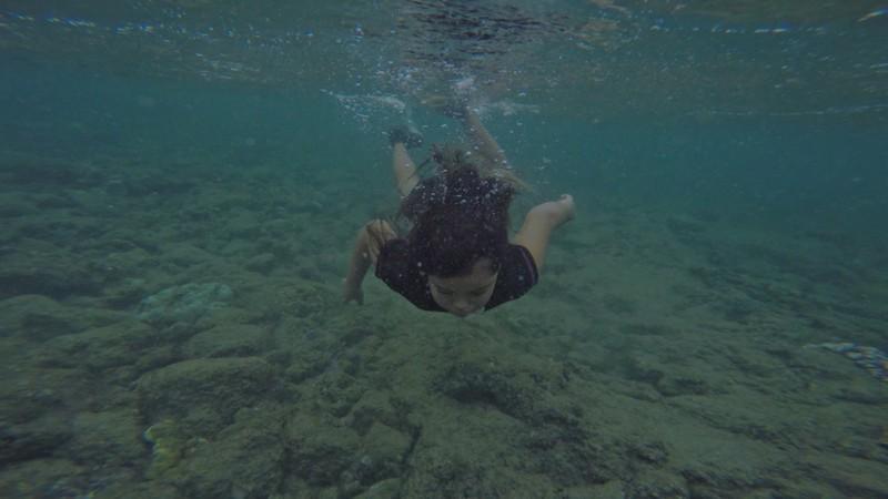 Swarm Season