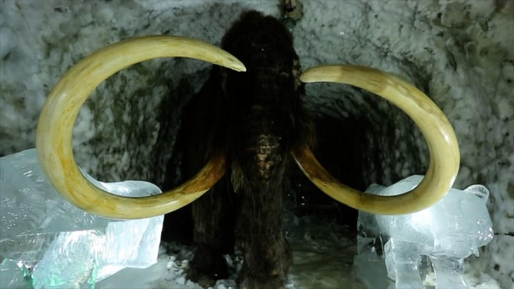 Passions for the Mammoth
