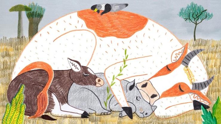 The Calves
