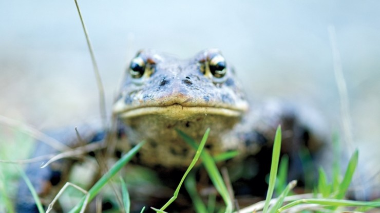 Toad People