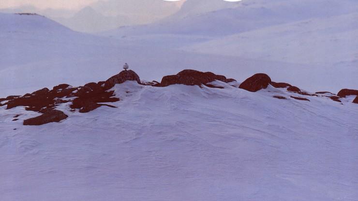 Skierri: Land of the Dwarf Birches