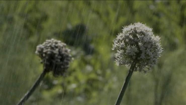 L'Orto di Flora