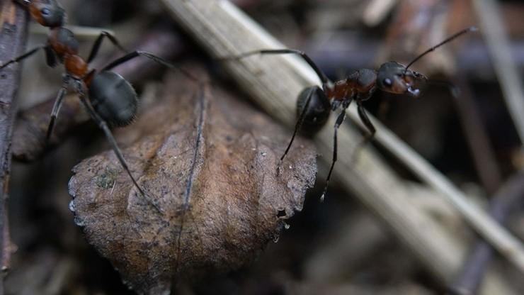 Where Do Ants Go