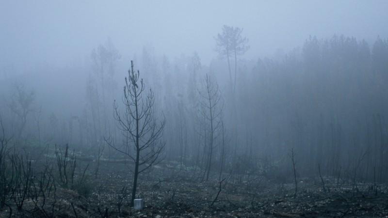 Winter's Portrait of a Burnt Landscape
