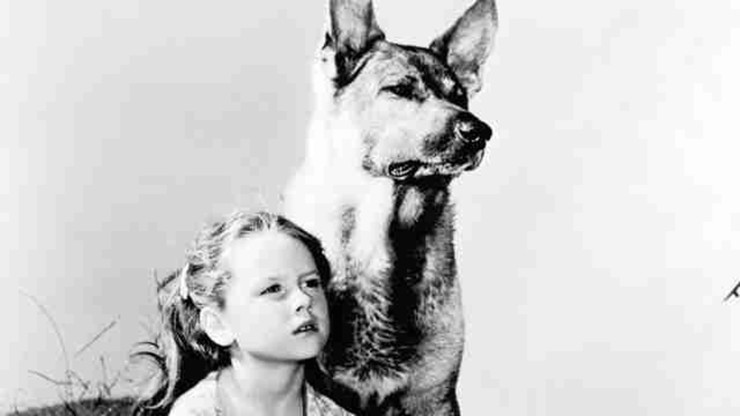 My Pal Wolf