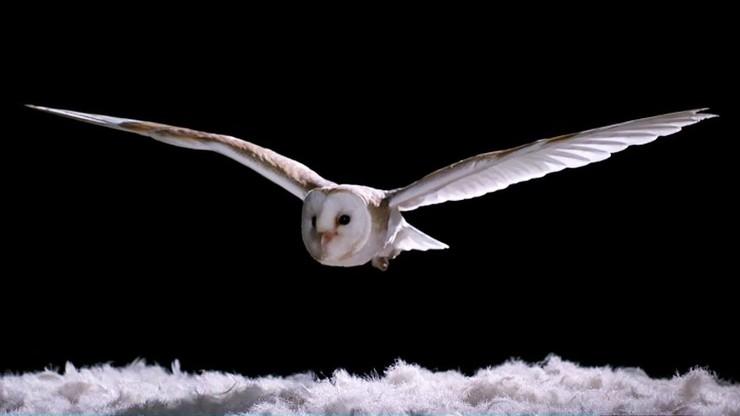 Super Powered Owls