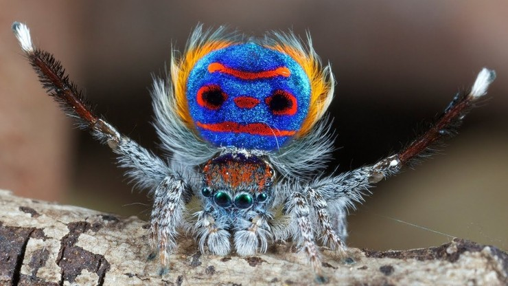 Incredible Spiders