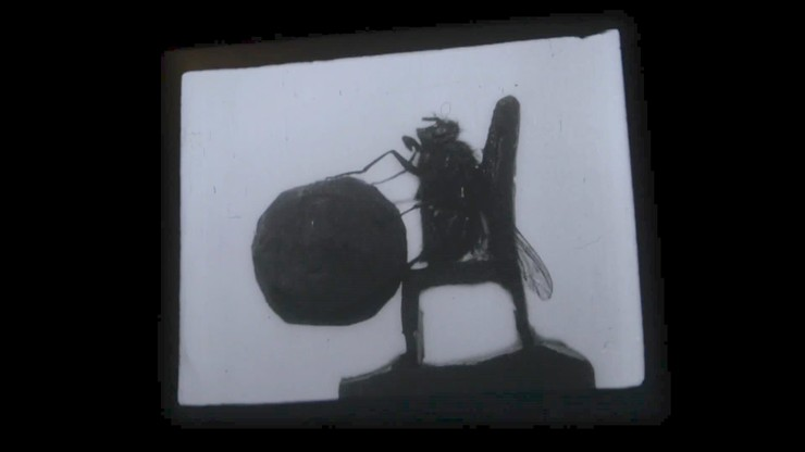 Edwardian Insects on Film