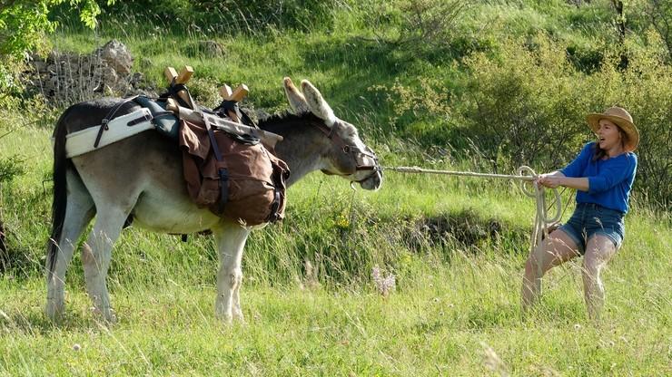 My Donkey, My Lover & I