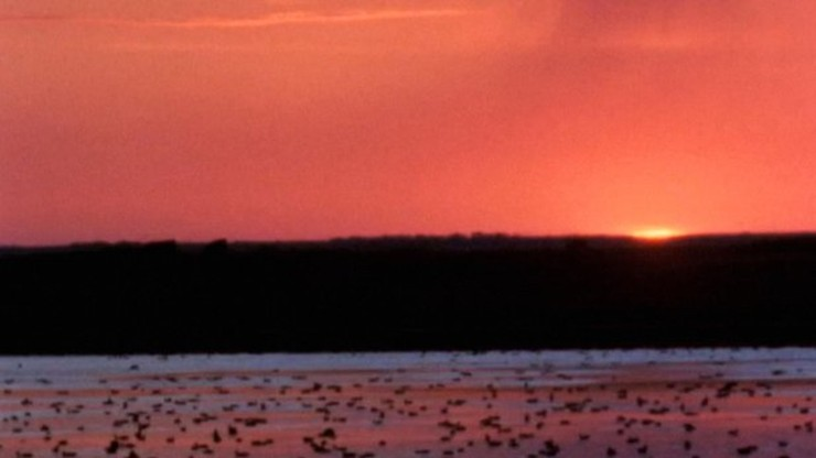 Waterfowl: A Resource in Danger