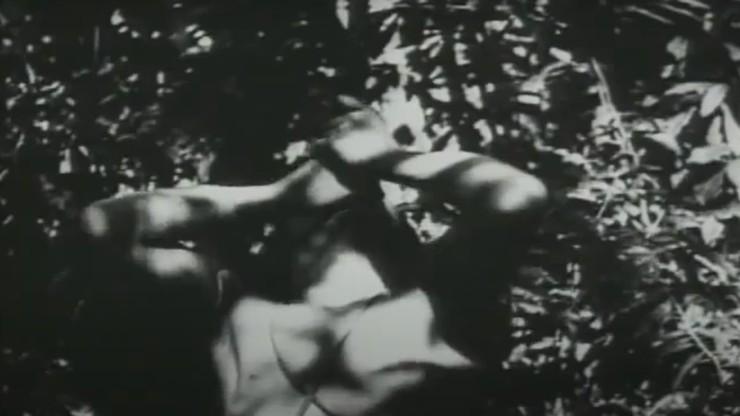 The Filmmaker of the Amazon