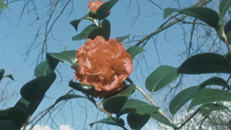 Plática de una Flor
