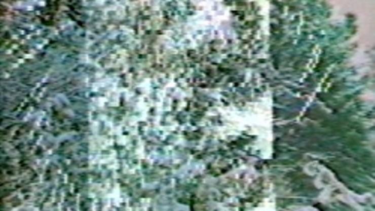 Selected Treecuts