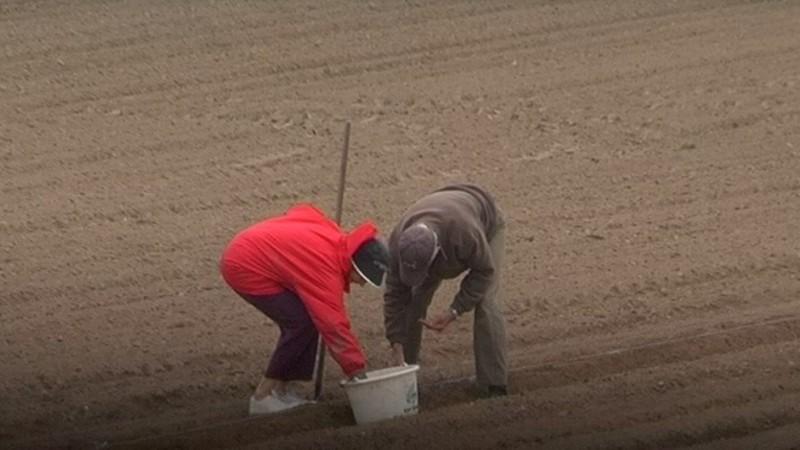 Les Jardiniers du Petit Paris