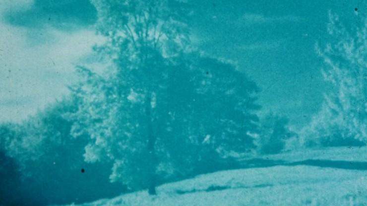 37/78: Tree Again