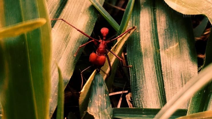 Republic of Evil Ants