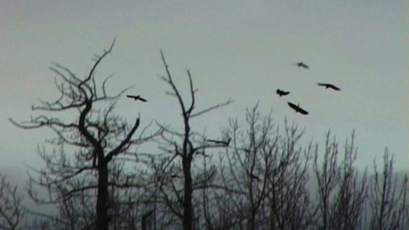 The Flight of Tulugaq