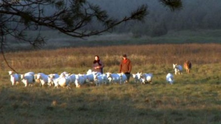 Following the Sun and Goats