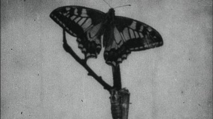 The History of a Butterfly: A Romance of Insect Life