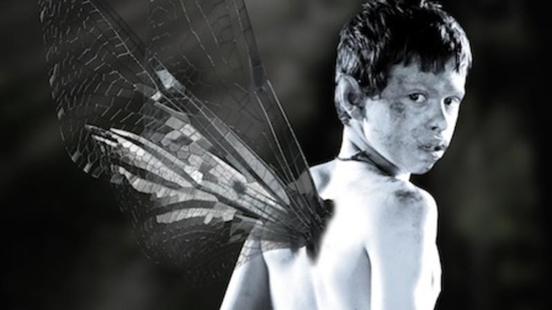 Fairycatcher