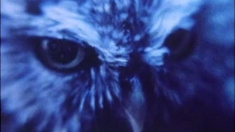 The Owl's Heritage