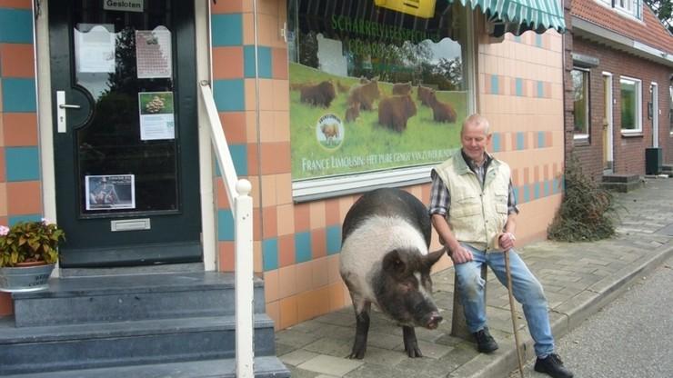 Divine Pig