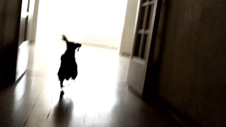 Color Runaway Dog